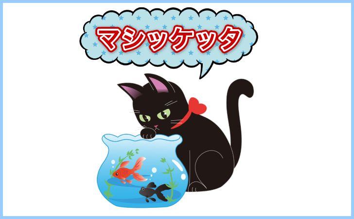 マシケッタの猫
