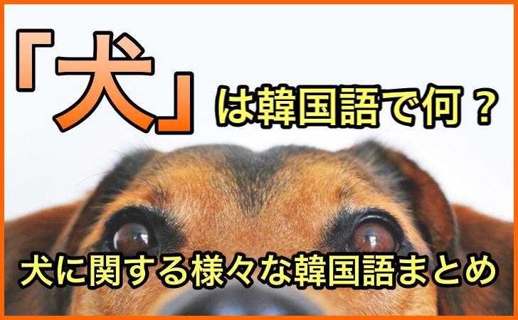 「犬」の韓国語