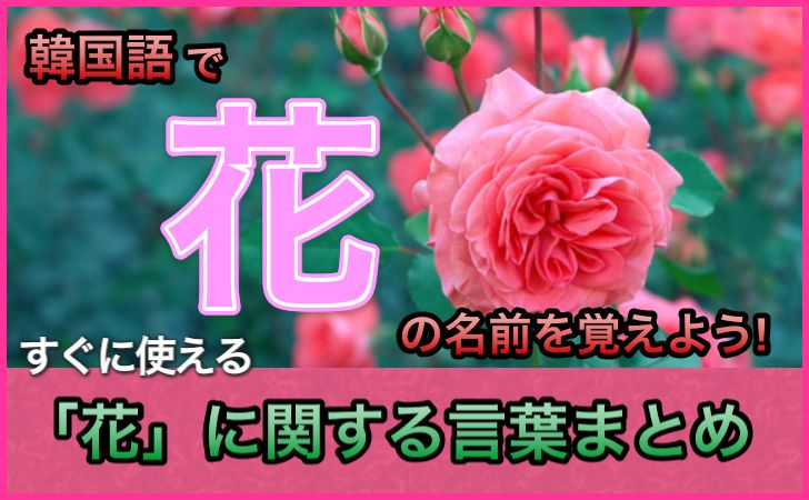 「花」の韓国語