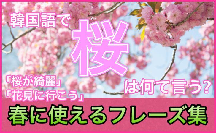 「桜」の韓国語