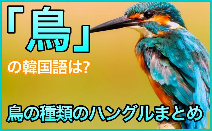 「鳥」の韓国語