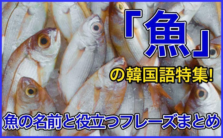 「魚」の韓国語