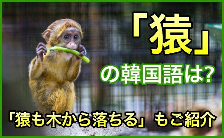 「猿」の韓国語