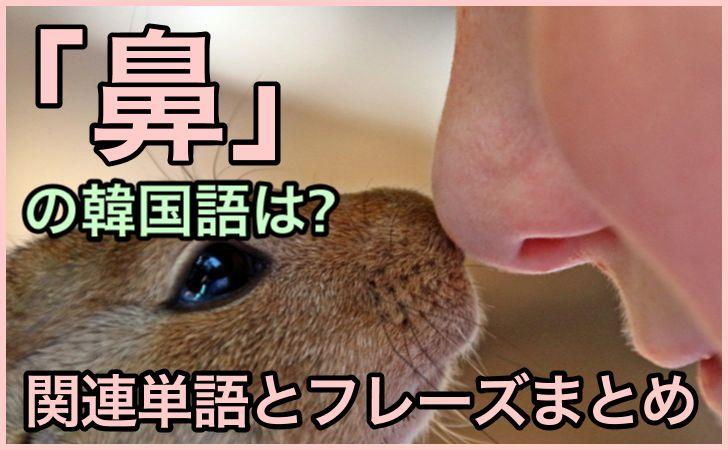 「鼻」の韓国語